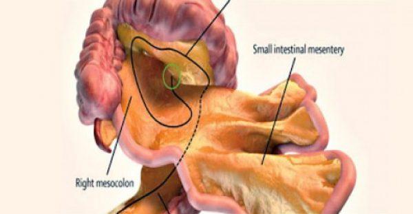 Ανακαλύφθηκε νέο όργανο στο ανθρώπινο σώμα! Δείτε ποιο είναι και που βρίσκεται.