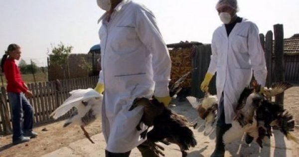 Η γρίπη των πτηνών πέρασε τον Έβρο – Συμπτώματα και πρόληψη