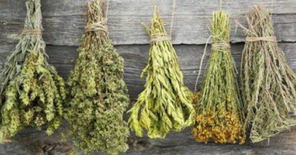 22 εκπληκτικά ελληνικά βότανα και οι ιδιότητές τους