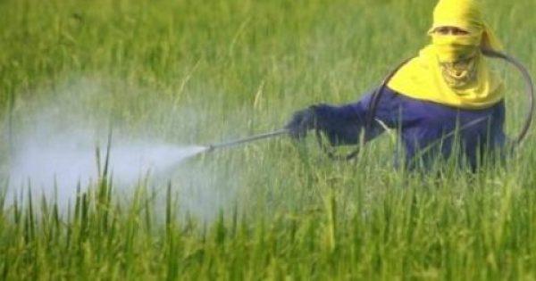 Μεγάλη προσοχή:  Τουρκικές πιπεριές με καρκινογόνο ουσία απειλούν την υγεία