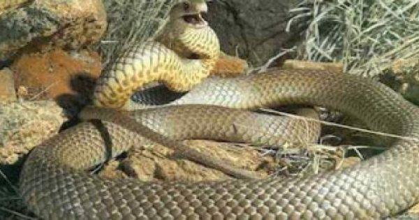 Τι να κάνεις μόλις δεις φίδι;