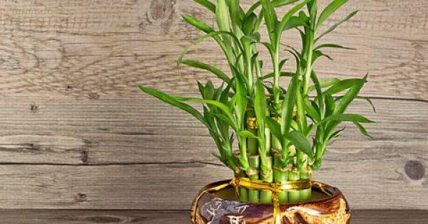Φυτά:Ποια προσελκύουν θετική ενέργεια