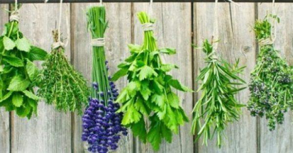 Βότανα που δυναμώνουν την καρδιά