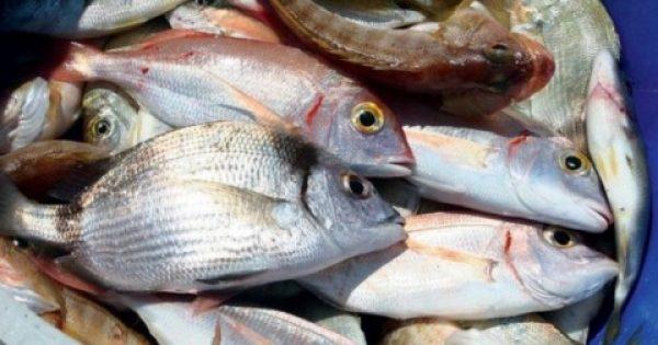 ΠΡΟΣΟΧΗ! Αυτά τα ψάρια είναι επικίνδυνα για την υγεία- Τι πρέπει να προσέχετε