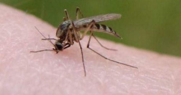 """Γιατί τα κουνούπια """"προτιμούν"""" συγκεκριμένα άτομα"""