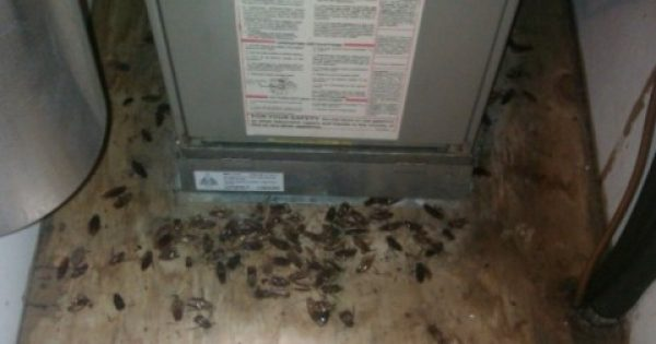Κατσαρίδες ΤΕΛΟΣ! Μία απίστευτη σπιτική συνταγή για να εξαφανίσετε τις κατσαρίδες από το σπίτι σας.