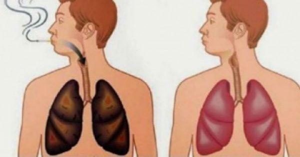 Αυτό το ξέρατε; Υπάρχουν τροφές που καθαρίζουν τα πνευμόνια σας … Δείτε!