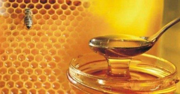 Εκπληκτικό! Έρευνα του Α.Π.Θ. εξέτασε 48 διαφορετικά ελληνικά μέλια. Δείτε ποιο μέλι είναι το καλύτερο για την υγεία!!