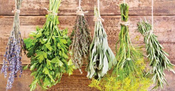 Αυτά είναι το βότανα που καταπολεμούν τον διαβήτη