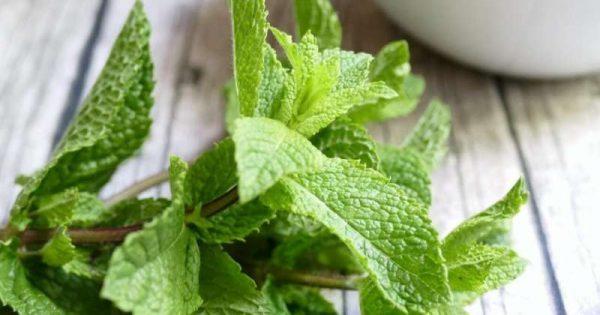 Το αρωματικό φυτό που θωρακίζει το πεπτικό σύστημα