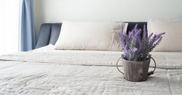 6 φυτά εσωτερικού χώρου που εγγυώνται καλύτερο ύπνο