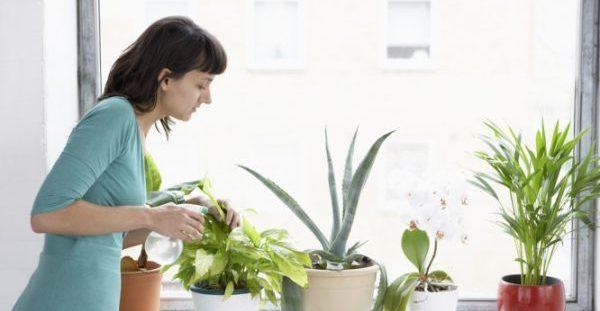 Καλύτερη ποιότητα αέρα μέσα στο σπίτι, αν έχετε αυτά τα φυτά εσωτερικού χώρου [pics]