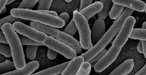 Γιατί τα βακτήρια που φτάνουν από το χωράφι σε εμάς είναι τόσο ανθεκτικά