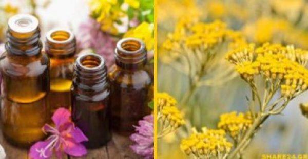 Ελίχρυσος – Γνωρίστε το Φυτό της Αιώνιας Νεότητας! 13 Ιδιότητες που του Δίνουν αυτόν τον Τίτλο!