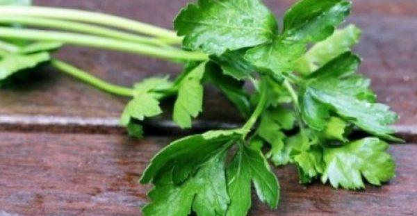 Το Ελληνικό βότανο κατά του καρκίνου