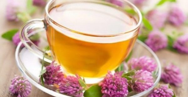 Ποιο βότανο ενισχύει τις νοητικές ικανότητες και βελτιώνει τη μνήμη κατά 75%