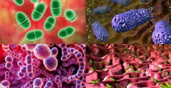 Άτλαντας με τους πιο συνηθισμένους μικροοργανισμούς που ζουν στο κόσμο