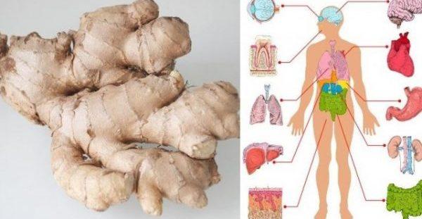 Να τι θα συμβεί στο σώμα σας αν φάτε Τζίντζερ (πιπερόριζα) για ένα μήνα!