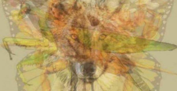 Εσείς τι βλέπετε στη φωτογραφία; Εκπληκτικό τεστ ψυχολογίας