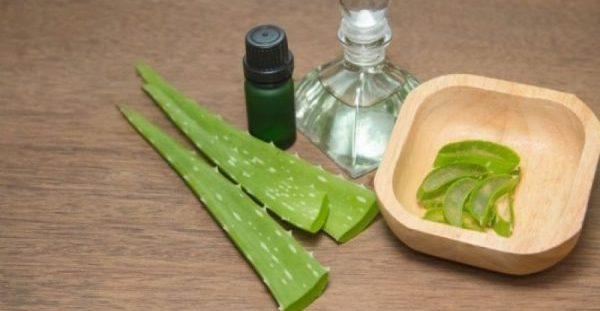 Αλόη βέρα: Ένα πολύτιμο βότανο με πλούσια οφέλη για την υγεία μας!!!