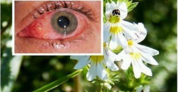 Βότανο Βελτιώνει την Όραση ακόμα & σε άτομα άνω των 70 ετών!
