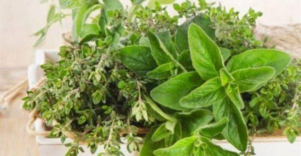 6 βότανα για άμεση απώλεια βάρους και καύση λίπους