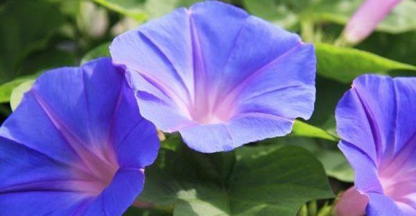 Το λιλιπούτειο φυτό που κρύβει μια δραστική αντικαρκινική θεραπεία