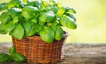 Τρία φυτά που επηρεάζουν θετικ...